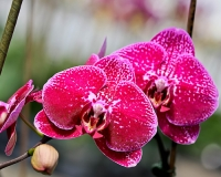 Dennis-Jordans-Photography;Florida-Wildlife-Photography;Flowers;Nature-Photography;Orchid
